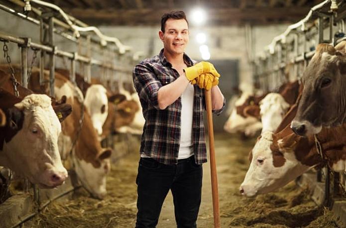 Прикарпатські аграрії отримають з державного бюджету дотації за утримання корів