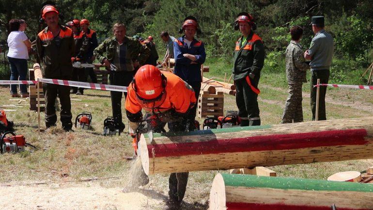 Прикарпатські лісоруби позмагалися за звання найкращих