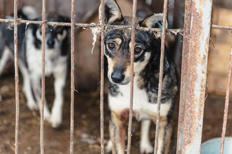 Посмотреть фото собак из приютов